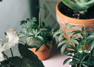 Plants and home decor at Electric Co. Market