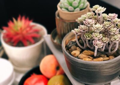 Succelent plants and home decor in Bedford, Virginia